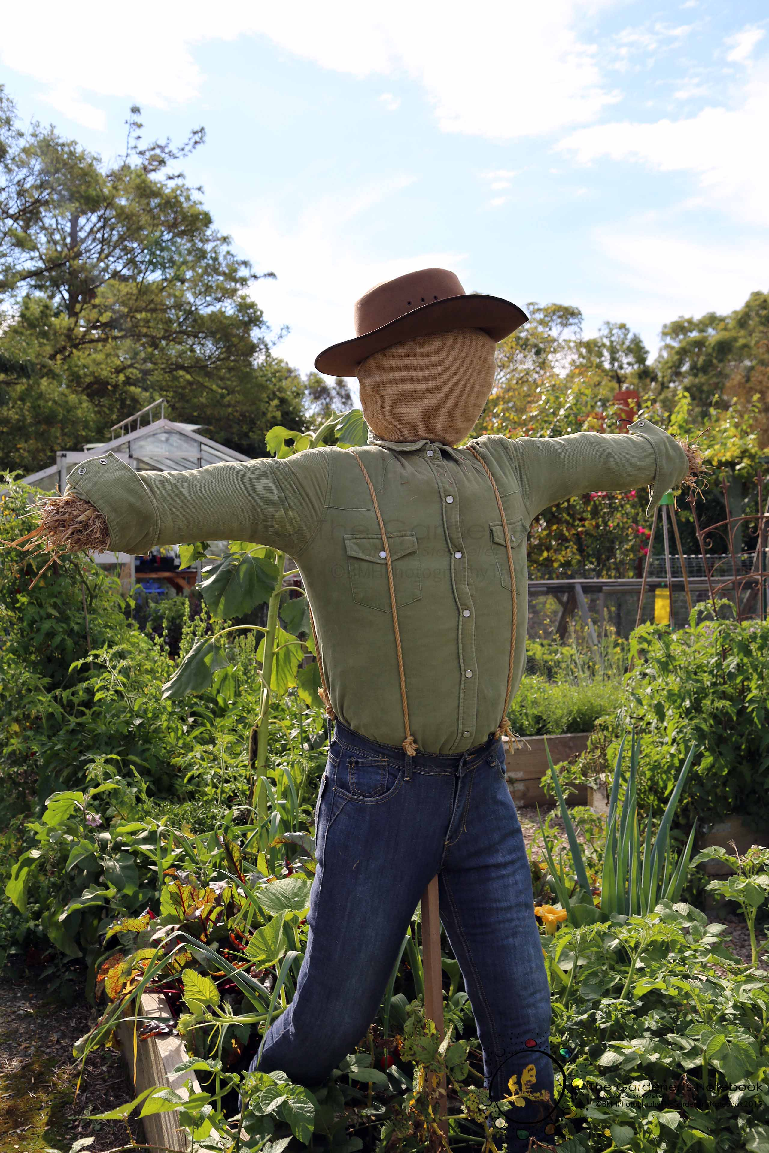 Diy How To Building A Scarecrow The Gardener S Notebook