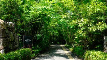 Kochi Japan Botaincal Gardens Tomitaro Makino travel (206)