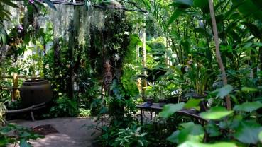 Kochi Japan Botaincal Gardens Tomitaro Makino travel (408)