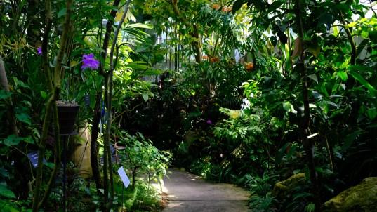 Kochi Japan Botaincal Gardens Tomitaro Makino travel (453)