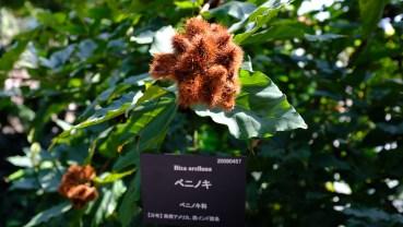 Kochi Japan Botaincal Gardens Tomitaro Makino travel (484)