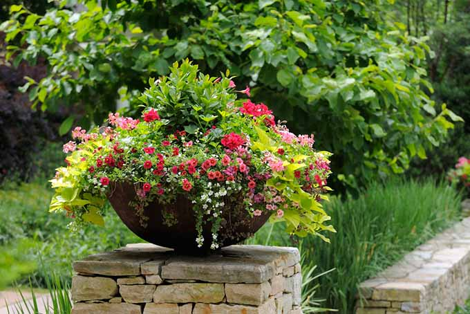 Container Flowers on Stone Wall | GardenersPath.com