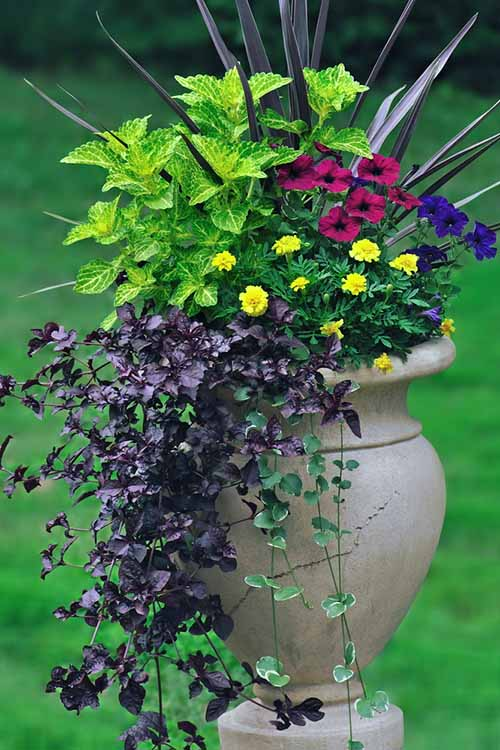 Container garden looking sad and tired when the dog days of summer roll on by? Here's some ridiculously simple tricks to keep your containers looking great in the heat, no matter what: https://gardenerspath.com/how-to/containers/tips-for-beautiful-garden-containers/
