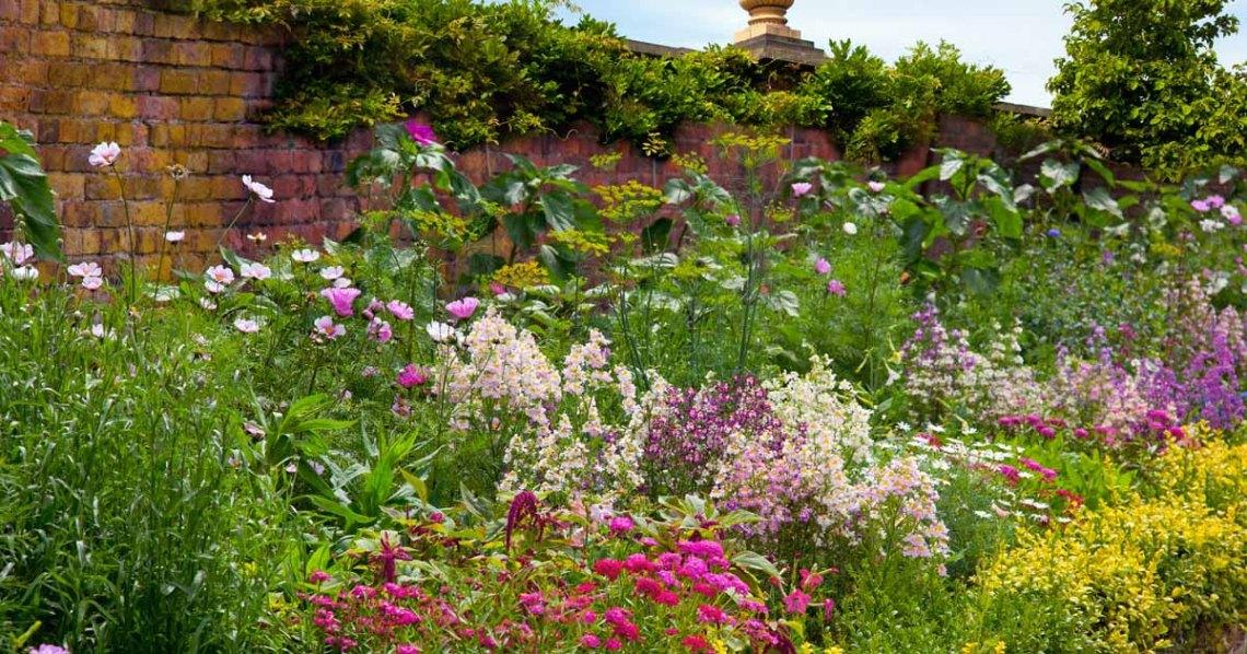 17 Flowering Perennials That Will Grow Anywhere Gardener S Path