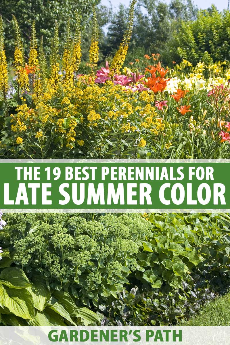 The 19 Best Perennials For Late Summer Color Gardener S Path
