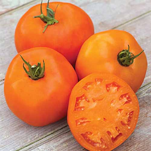 A close up of three deep orange colored 'Orange Slice' tomatoes, with one cut in half.