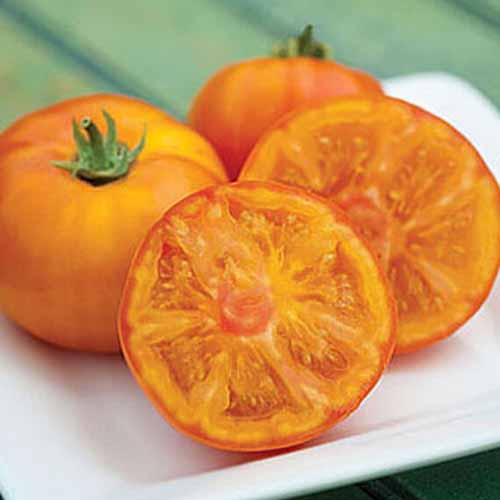 A close up of 'Tye Dye' variety of tomato, a yellow fruit, one cut in half and two whole, on a white ceramic plate.