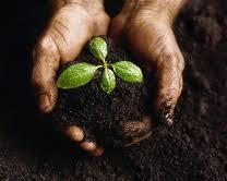 Dirt in Hands