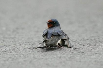 sparrow i