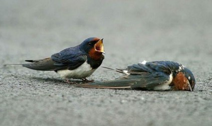 sparrow v