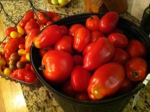bushel tomato ii