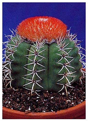 How To Grow A Cactus From Seed