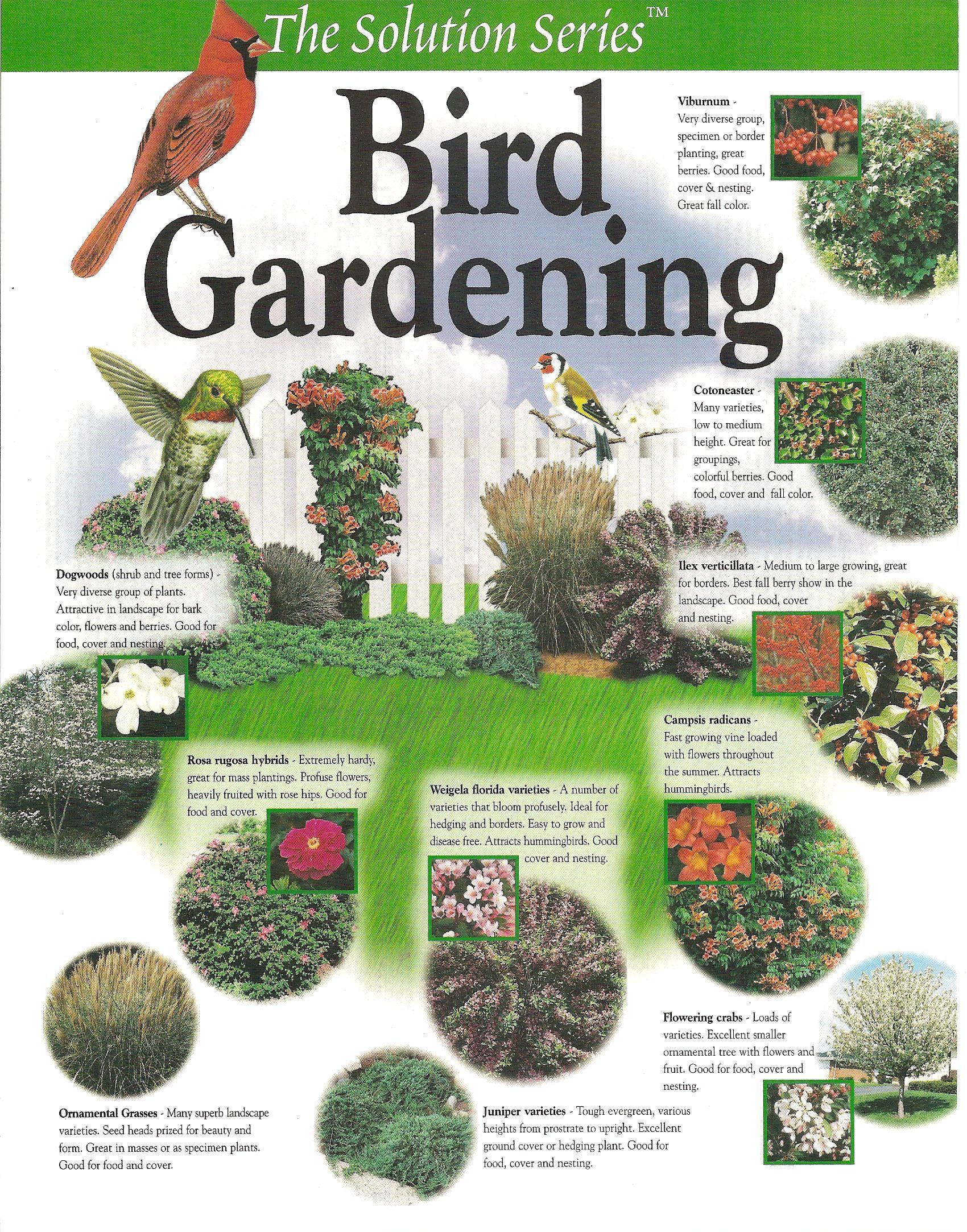 BIRD GARDENING | Gardengal Bevy on Birds Backyard Landscapes id=62303