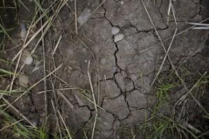 Dry Soil - by Steven Minns