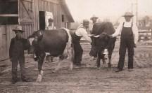 Shattuck Dairy - two cows w bells