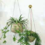 30 Adorable Indoor Hanging Plants to Decorate Your Home (12)