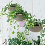 30 Adorable Indoor Hanging Plants To Decorate Your Home (16)