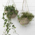 30 Adorable Indoor Hanging Plants To Decorate Your Home (29)