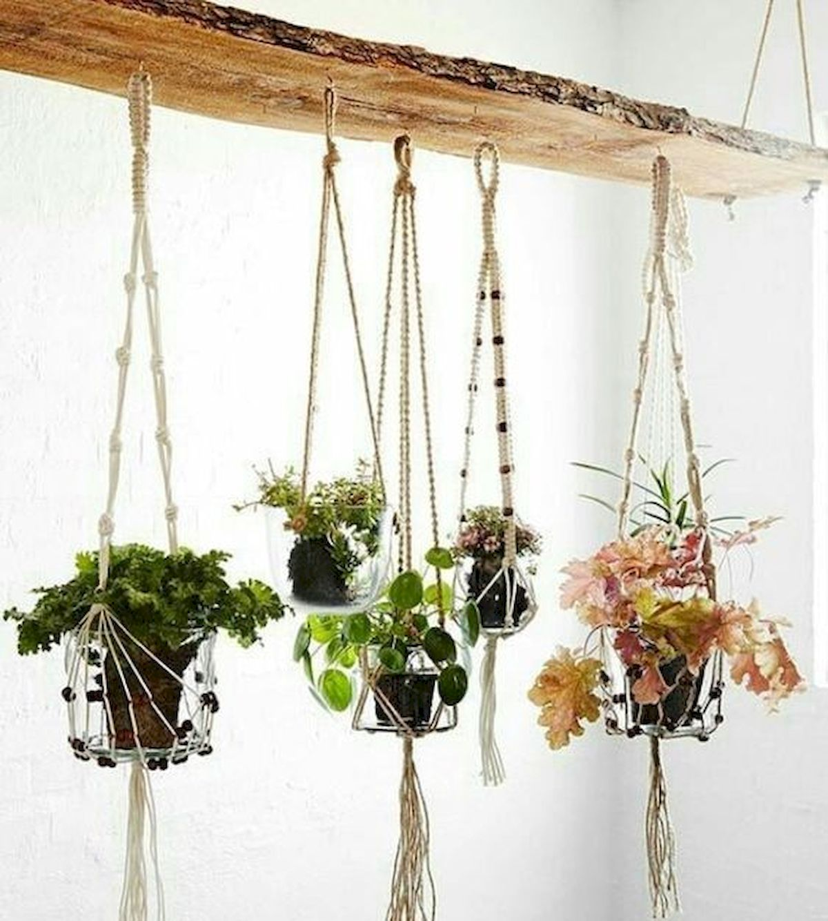 30 Adorable Indoor Hanging Plants To Decorate Your Home (3)
