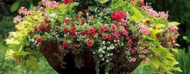 40 Beautiful Container Flower Garden Ideas (21)