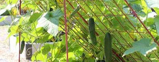45 Interesting Vegetables Garden Ideas (39)