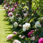 55 Beautiful Flower Garden Design Ideas (7)