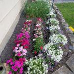 80 Beautiful Small Flowers Garden Ideas (55)