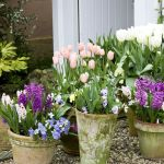 80 Best Patio Container Garden Design Ideas (3)