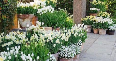 20 Beautiful Backyard Flowers Garden Ideas (14)