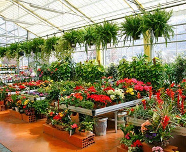 Gorgeous plant nursery business ideas