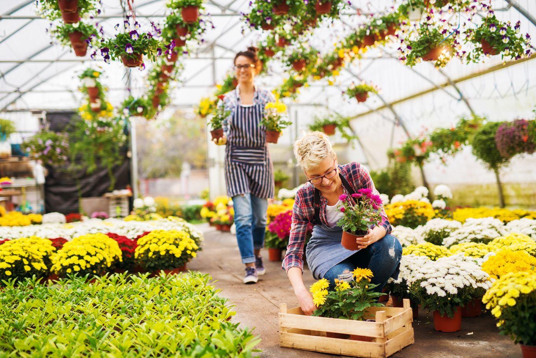 Cool Plant Nursery Business Ideas