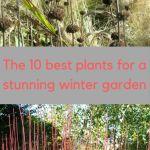 Cool Winter Garden Ideas