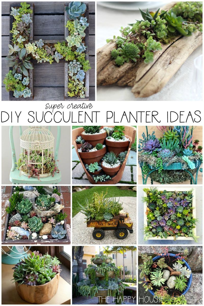 Nice  outdoor plants in pots ideas