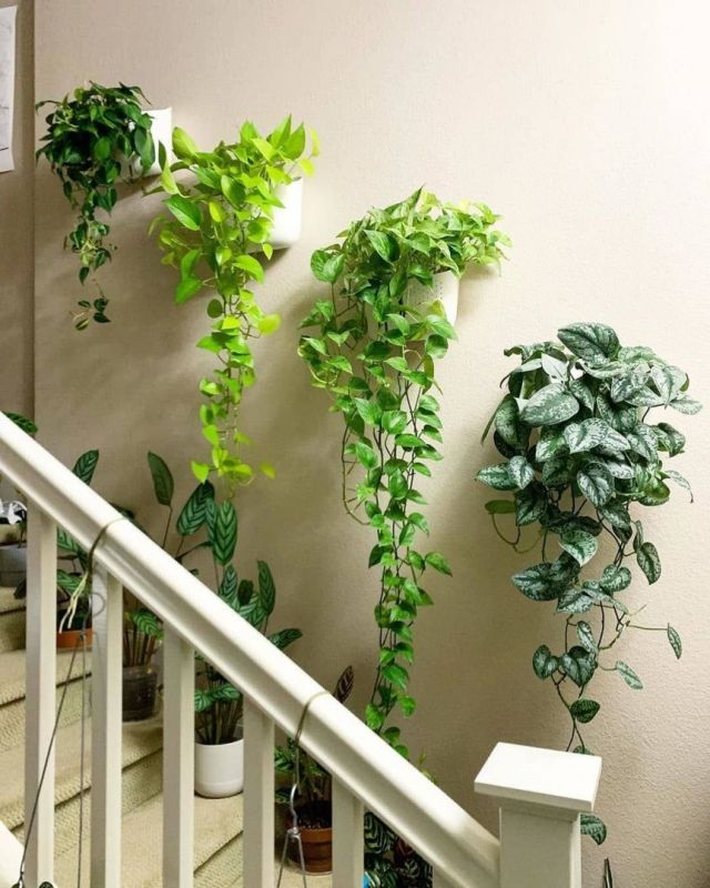 Amazing indoor plant wall ideas