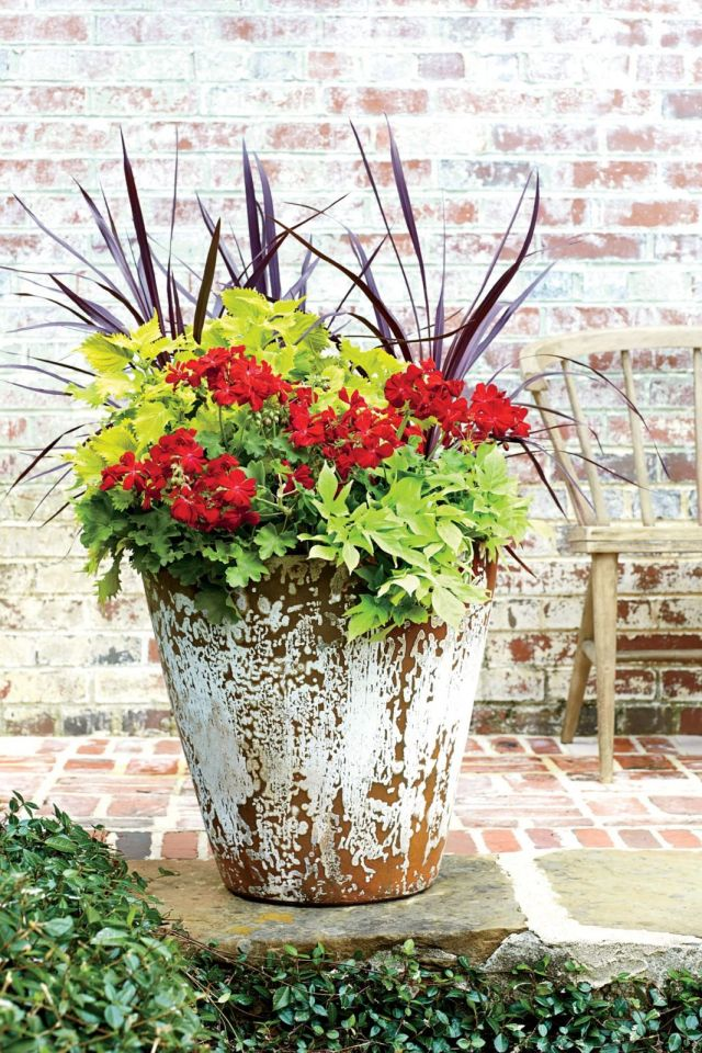 Adorable container plants for full sun ideas
