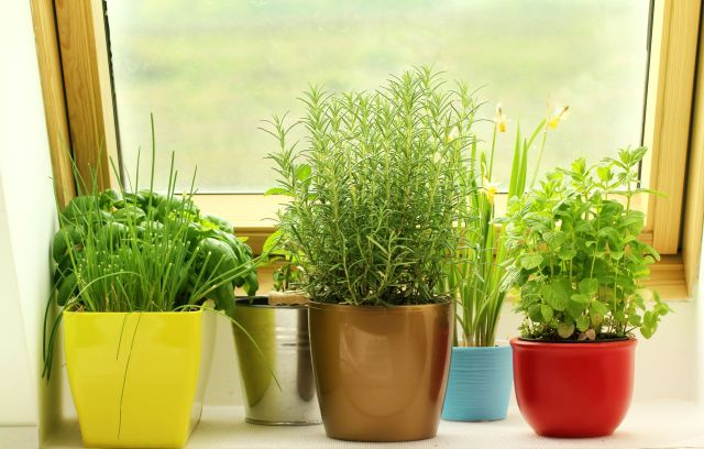Best indoor vegetable garden ideas