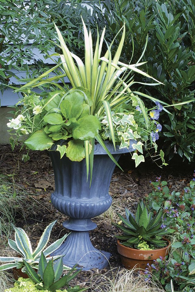 Best container plants for full sun ideas