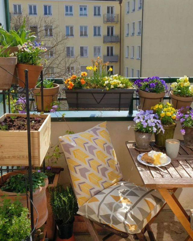 Best balcony plant ideas