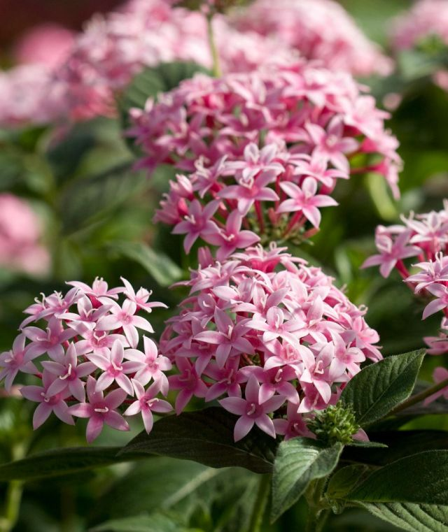 Beautiful container plants for full sun ideas