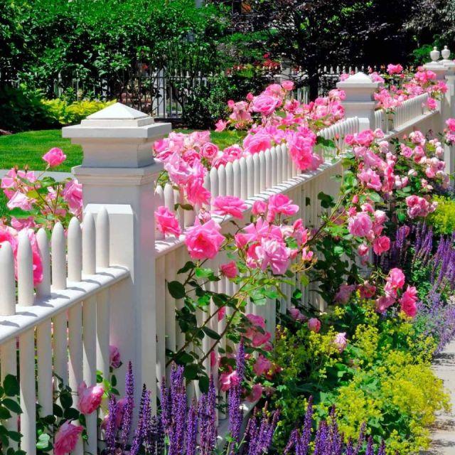 Amazing flower garden ideas in front of house