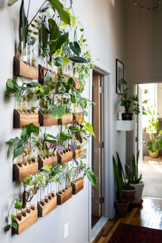 Cool indoor plant wall ideas
