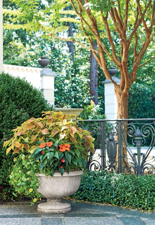 Amazing outdoor plants in pots ideas