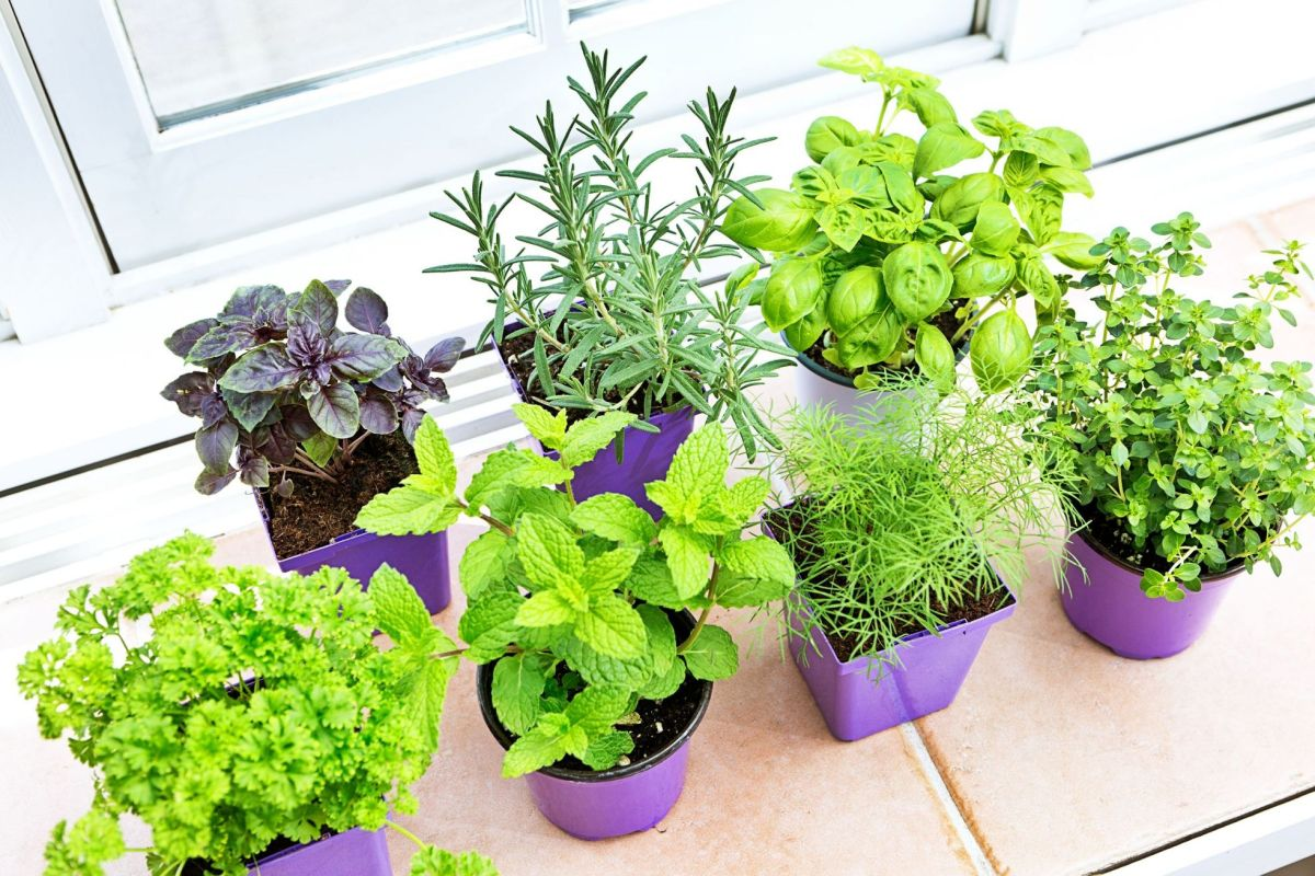 Gorgeous  indoor vegetable garden ideas
