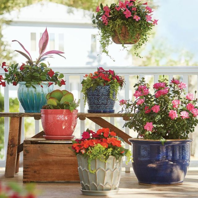 Beautiful outdoor plants in pots ideas