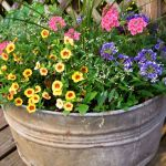 Wonderful Container Plants For Full Sun Ideas