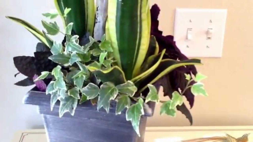 Top indoor potted plant arrangement ideas
