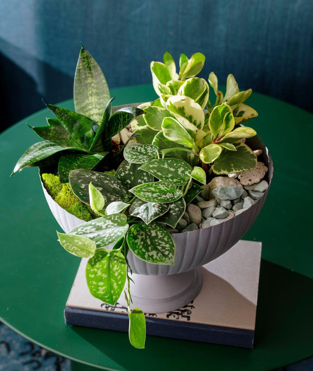 Beautiful Indoor Potted Plant Arrangement Ideas