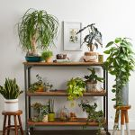 Best Indoor Potted Plant Arrangement Ideas
