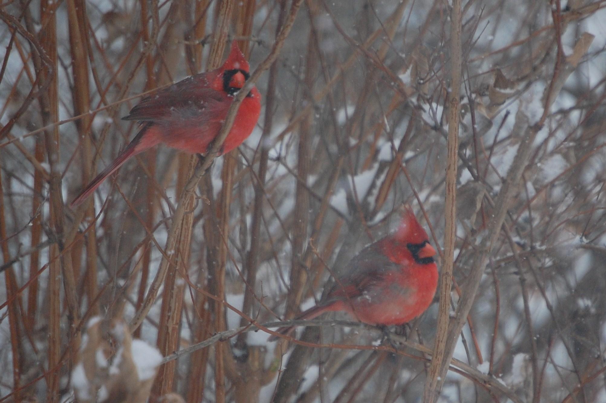The Year In Birds Part Ii Gardeninacity