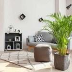 10 Best Indoor Low Light Trees Tall Plants That Don T Need Sunlight Gardenine